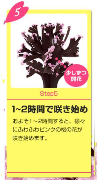 Magic桜の育て方5