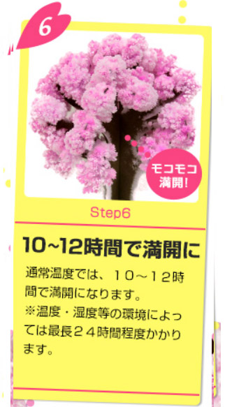 Magic桜の育て方6